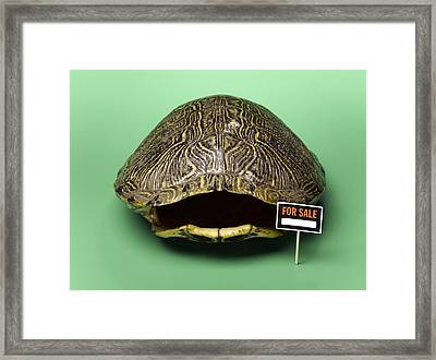 Empty Turtle Shell With For Sale Sign Framed Print by Jeffrey Hamilton