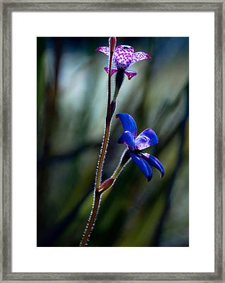 Enamel Orchid Framed Print by Heather Thorning