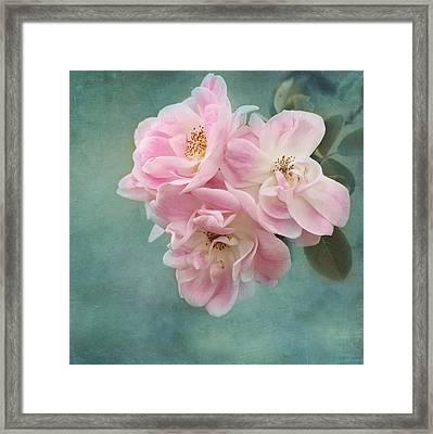 Enchanted Pink Rose Framed Print by Kim Hojnacki