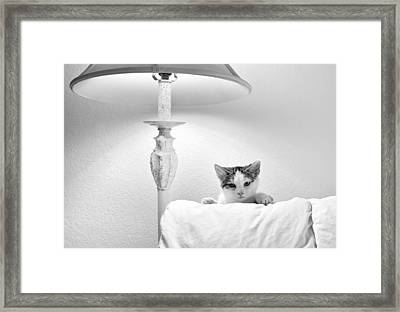 Enough With The Camera Already Framed Print by Peter O'Hara