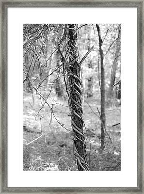 Entwined Framed Print by Suzanne  McClain