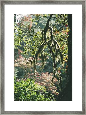 Epiphytic Moss Framed Print by Doug Allan
