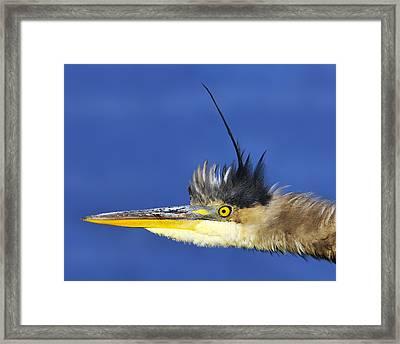Erect Framed Print by Tony Beck