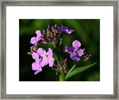 Essence Framed Print by Aimee L Maher Photography and Art Visit ALMGallerydotcom