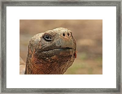 ET Framed Print by Karol Livote