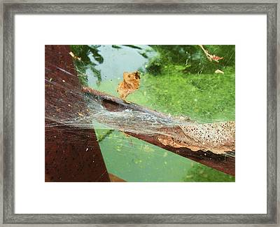 Even Leaves Have Dreams Framed Print by Todd Sherlock
