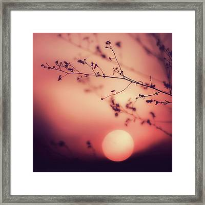Evening Delight Framed Print by Jack Wassell Photography