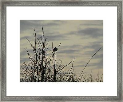 Evening Song Framed Print by Pamela Patch