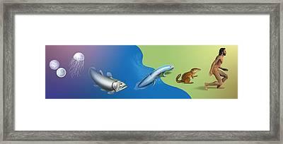 Evolution, Conceptual Artwork Framed Print by David Gifford