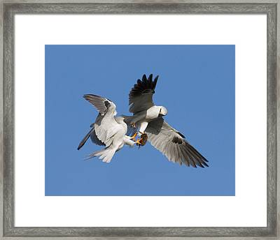 Exchange Food 1 Framed Print by Jimmy Huynh