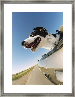 Excited Dog Framed Print by Darwin Wiggett