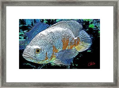 Exotic Fish  Framed Print by Colette V Hera  Guggenheim