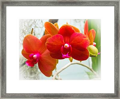Exotic Orchids Framed Print by Colleen Kammerer