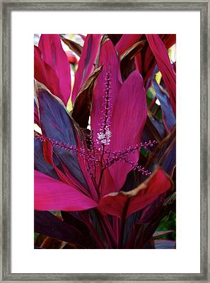 Explosion Framed Print by Joseph Yarbrough