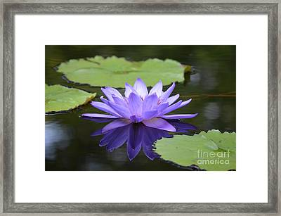 Express Yourself Framed Print by Maria Urso