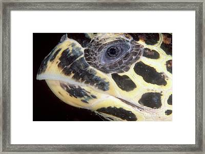Extreme Close-up Of The Head Framed Print by Beverly Factor