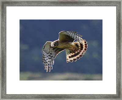 Eye Contact Framed Print by Angie Vogel