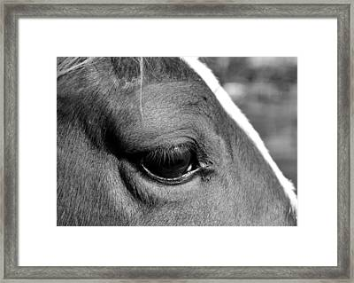 Eye Of The Horse Black And White Framed Print by Sandi OReilly