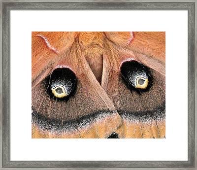 Eyes Of Deception Framed Print by Peg Urban