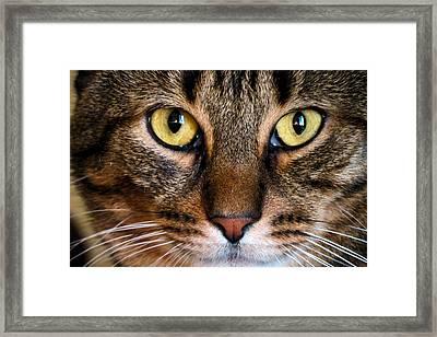 Face Framed Feline Framed Print by Art Dingo