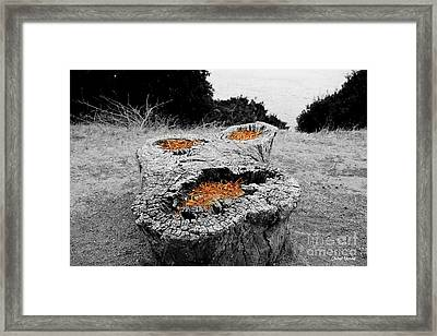 Faces In Nature Framed Print by Cheryl Young