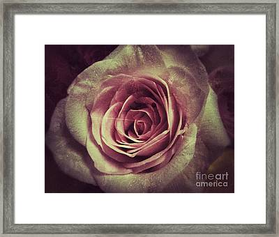 Faded Rose Framed Print by Angela Wright