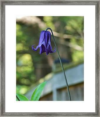 Fairy Bell Framed Print by Mary Zeman