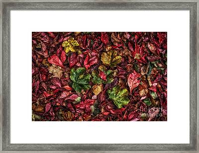 Fall Autumn Leaves Framed Print by John Farnan