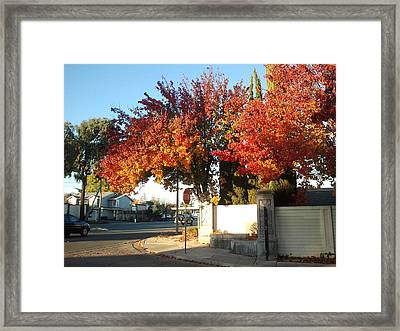 Fall Colors 2 Framed Print by Remegio Onia