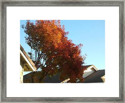 Fall Colors 4 Framed Print by Remegio Onia