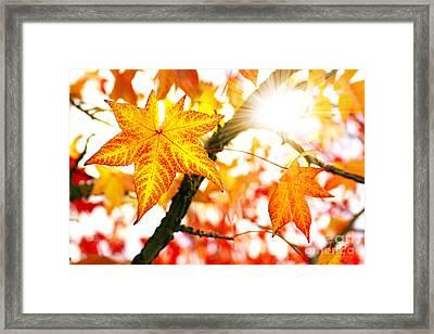 Fall Colors Framed Print by Carlos Caetano