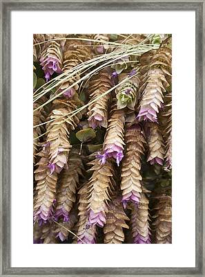 Fall Flowers Framed Print by Roxanne Weber