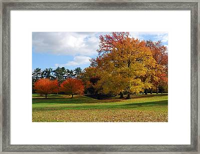 Fall Foliage Framed Print by Lisa Phillips