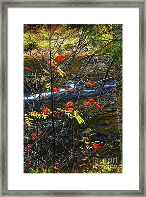 Fall Forest And River Framed Print by Elena Elisseeva