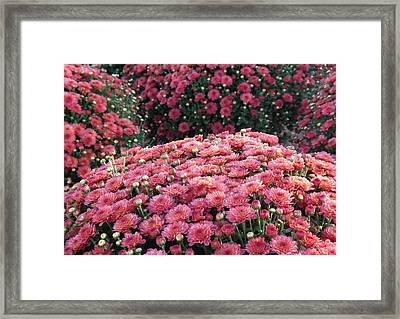 Fall Fragance Framed Print by Elizabeth Sullivan