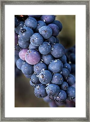 Fall Grapes Framed Print by Jean Noren