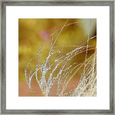 Fall Grass Framed Print by Artist and Photographer Laura Wrede