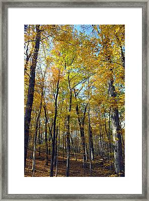 Fall In The Forest 2 Framed Print by Marty Koch