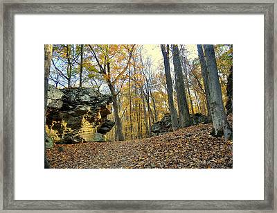 Fall In The Forest 3 Framed Print by Marty Koch