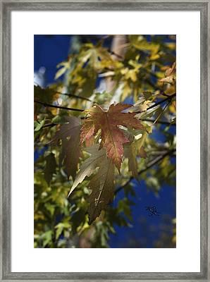 Fall Framed Print by Kelly Rader