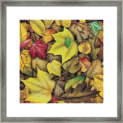 Fall Leaf Study Framed Print by JQ Licensing
