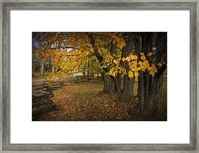 Fall Maple Leaf Trees With Split Rail Fence Framed Print by Randall Nyhof