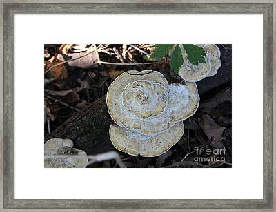 Fall Mushrooms Framed Print by Rick Rauzi
