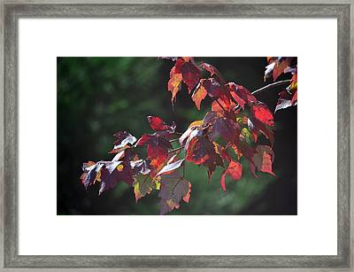 Fall Red Framed Print by Sandi OReilly