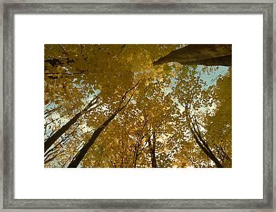 Fall Scene Framed Print by Tom Bush IV