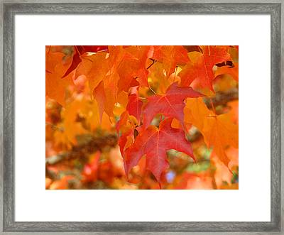 Fall Tree Leaves Art Prints Orange Red Autumn Framed Print by Baslee Troutman