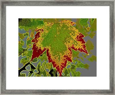 Falling Framed Print by Kathy Bassett