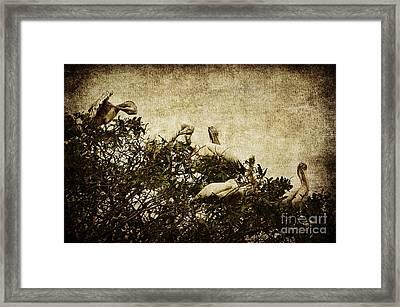 Family Tree Framed Print by Andrew Paranavitana