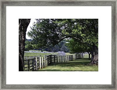 Farmland Shade Appomattox Virginia Framed Print by Teresa Mucha
