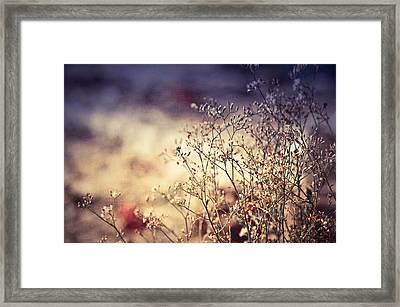 Fascinating Life Of Grass. Painting With Light Framed Print by Jenny Rainbow